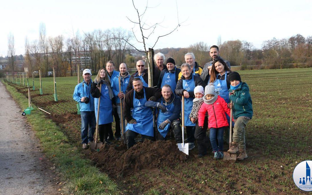 30 Zieräpfel-Bäume in Kitzingen gepflanzt!